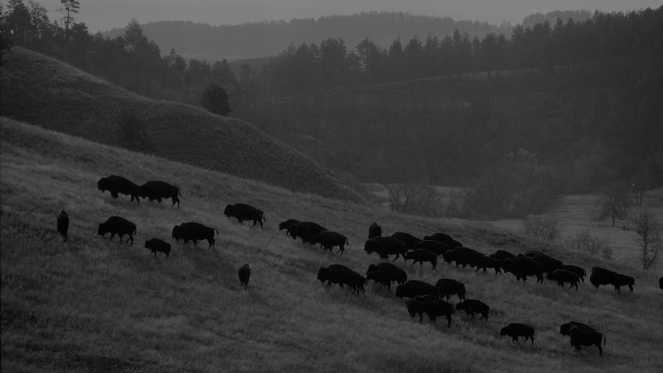 A Century of Wildlife Recovery in Custer State Park